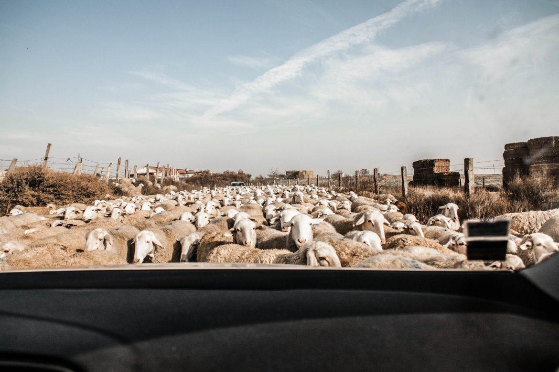 Roadtrip désert bardenas reales Espagne