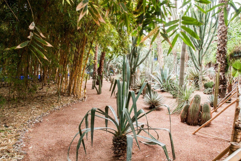 Le jardin majorelle l 39 oasis de marrakech for Le jardin marrakech