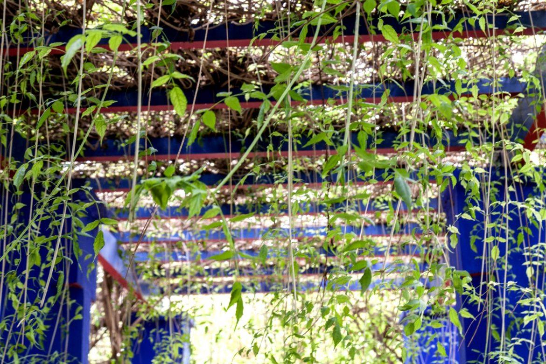 Le Jardin Majorelle, l'oasis de Marrakech