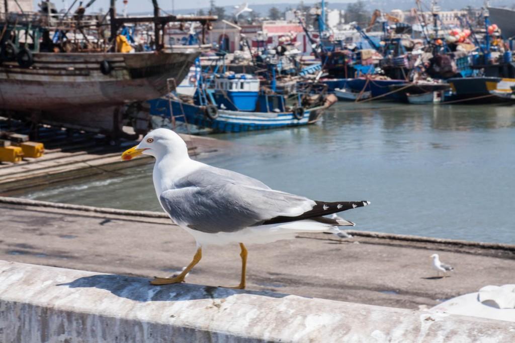 Essaouira : découvrir la veille ville et son port - Maroc