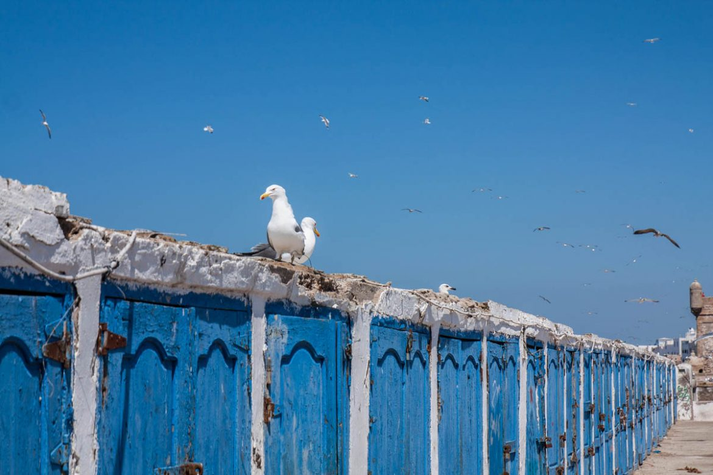 Visiter Essaouira : découvrir la veille ville et son port - Maroc