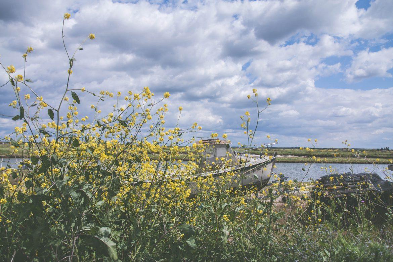 village-Mornac-Charente-Maritime-colza