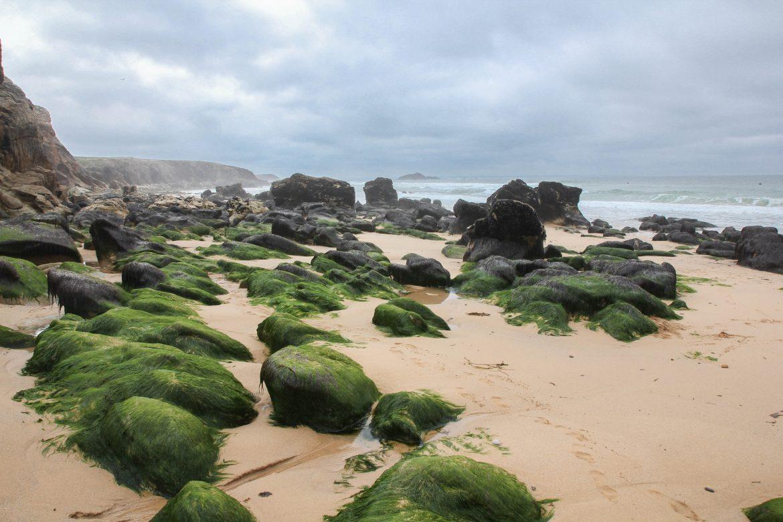 plage-port-blanc-quiberon-bretagne.jpg (18)