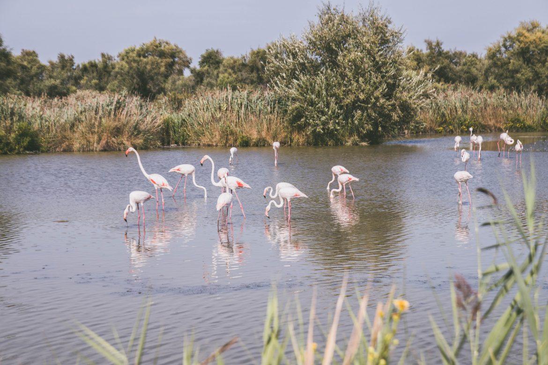 Parc ornithologique de Pont-de-Gau-saintes-maries-dela-mer