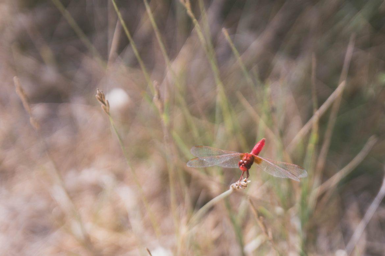 week end en van en Camargue, Parc ornithologique de Pont-de-Gau-saintes-maries-dela-mer