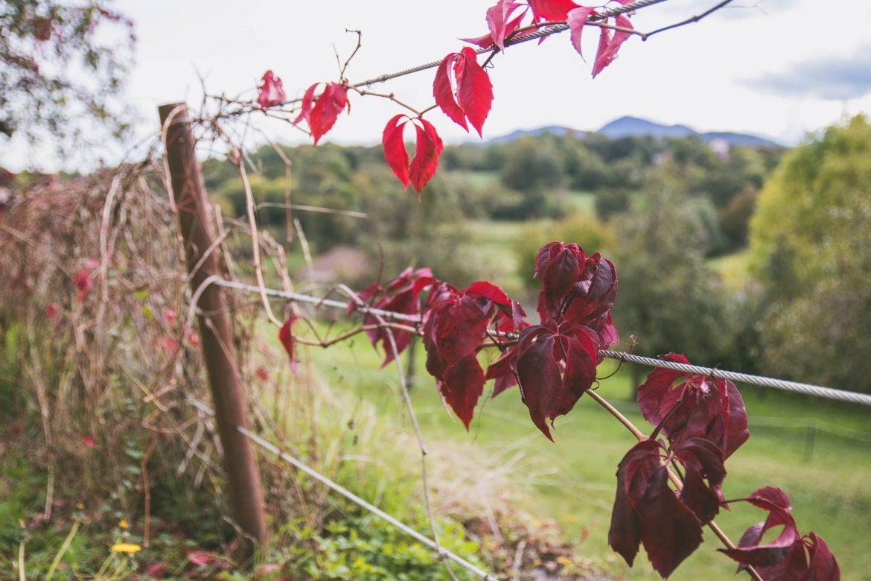 Le lac de Bethmale : balade nature et à Saint lizier