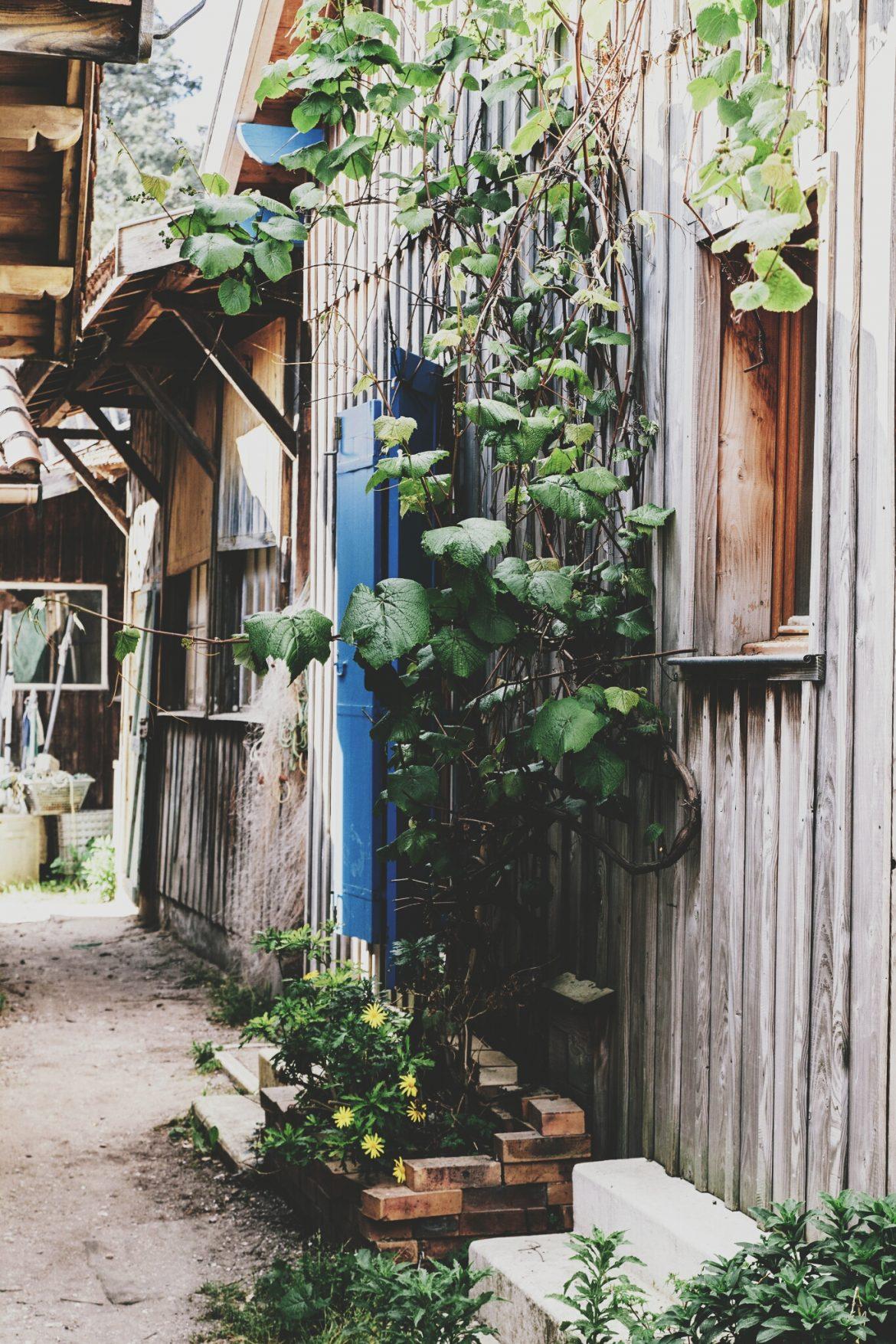 Visiter le village de l'Herbe - Cap Ferret