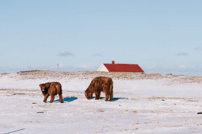 Les îles les Lofoten en Hiver - Norvége du nord