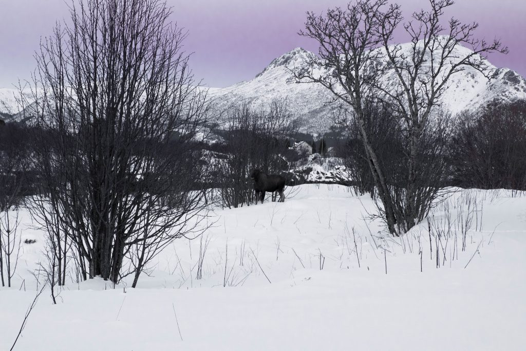 Itineraire iles lofoten hiver : Gravdal