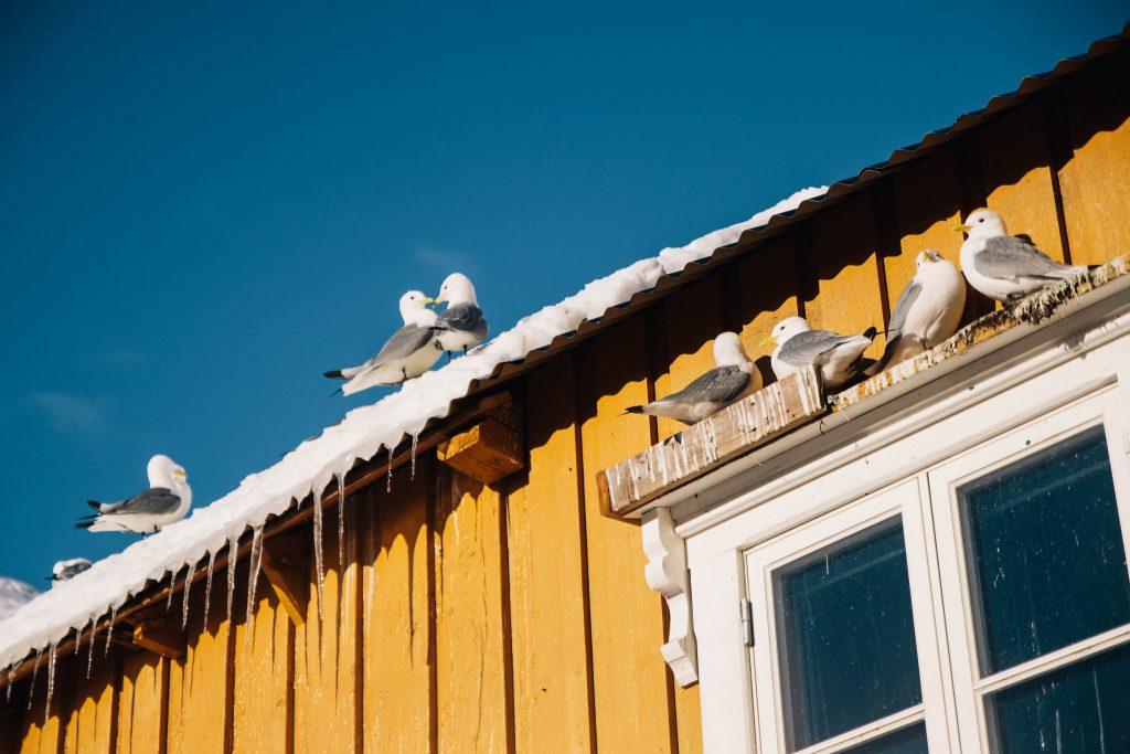 village de Nusfjord dans les îles Lofoten