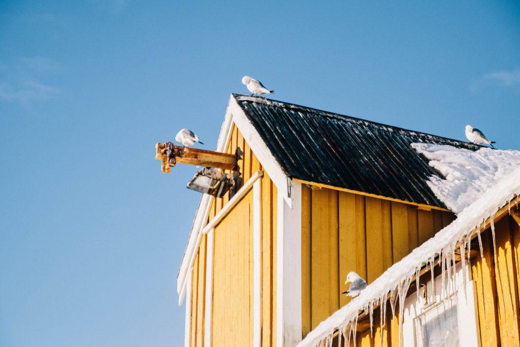 Découvrir le vllage de Nusfjord dans les îles Lofoten