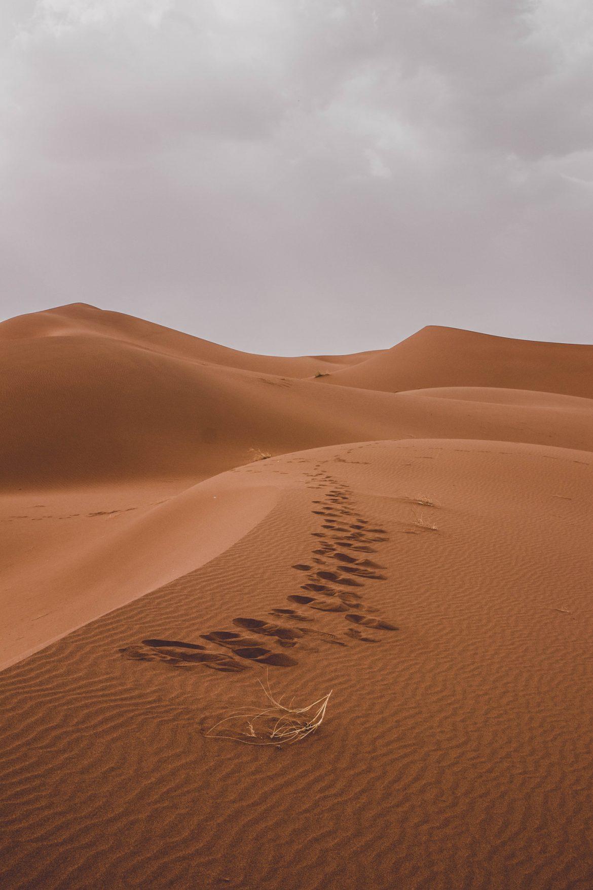 Desert marocain : road trip M'hamid, le plus beau désert du Maroc