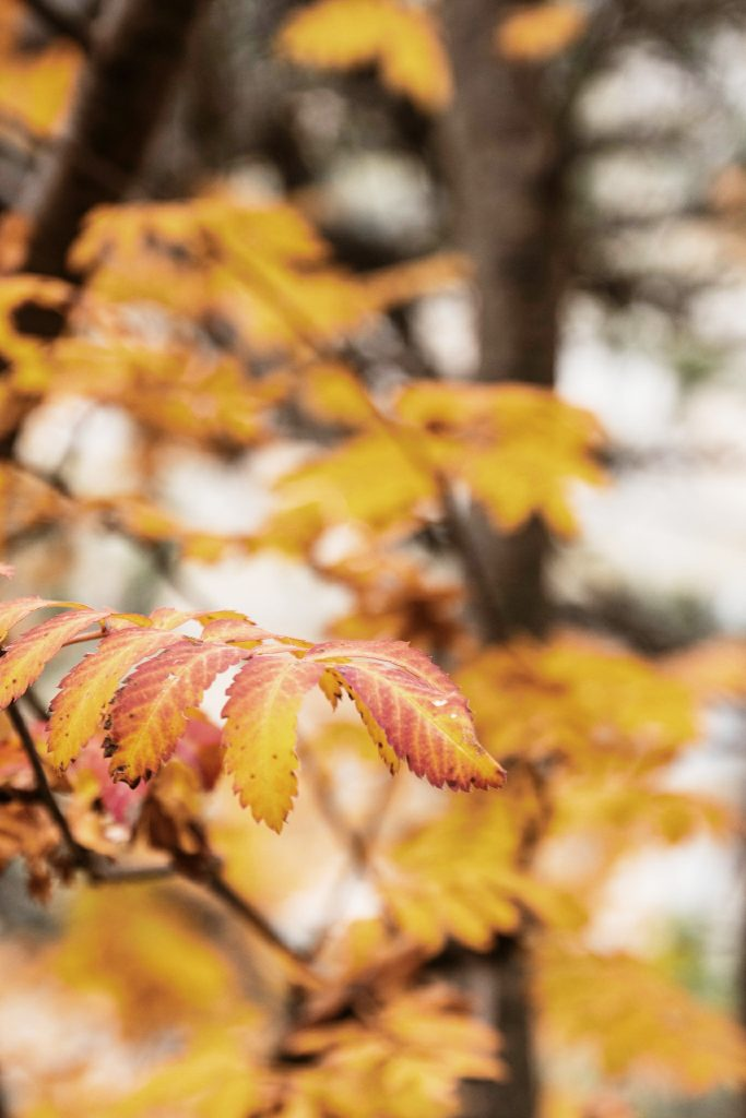 canyon ordesa automne