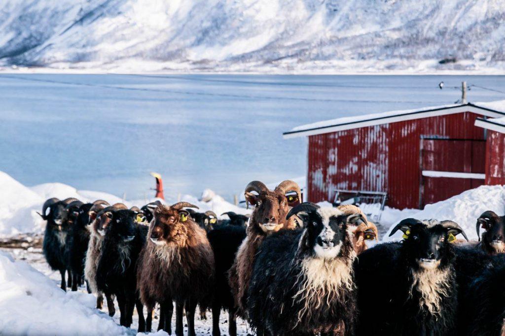 Ringvassøya, Tromso, Norvège