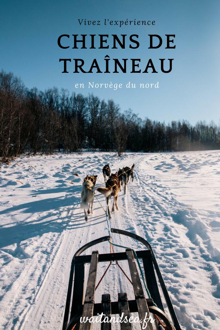 Faire du chien de traîneau (éthique !) dans les plus beaux paysage de Norvège
