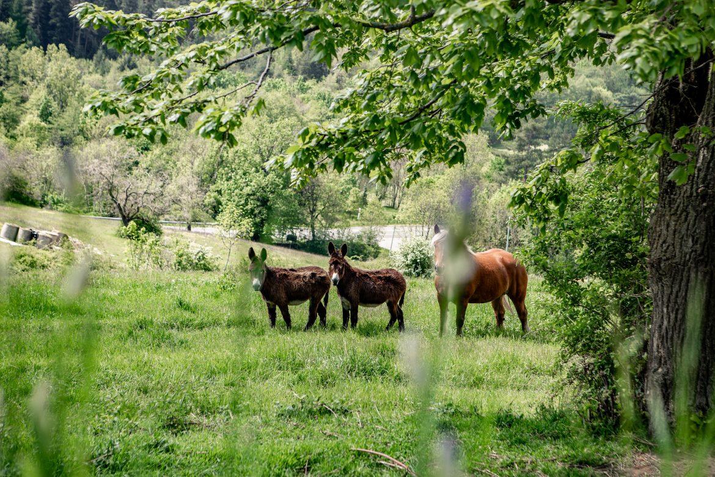 Loire - centre agro-écologique et permaculture
