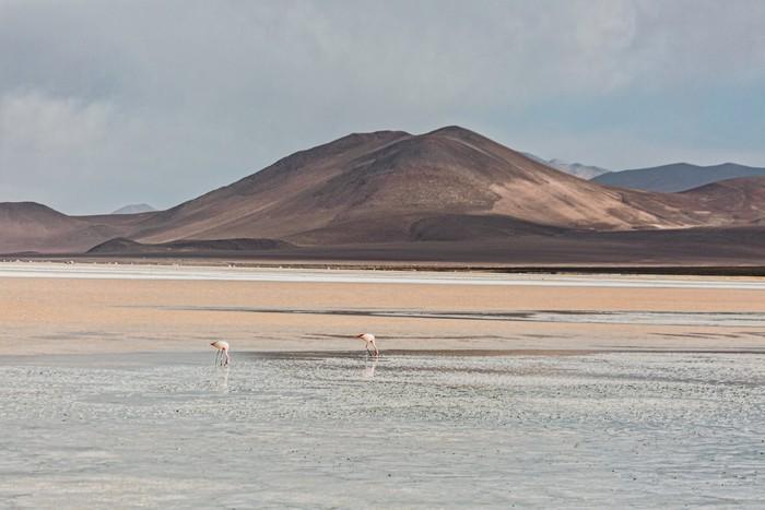 Le Chili en van
